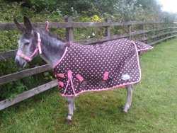 Lightweight Turnout Rug With Ripstop Outer Fully Cotton Lined No Polyfill Breathable Double Chest Straps Cross Over Surcingles Leg And Tail