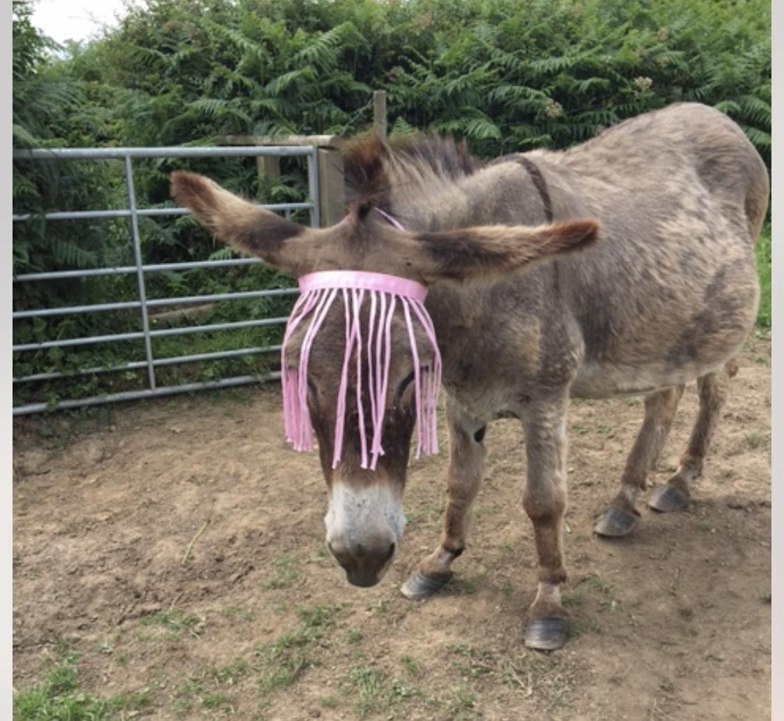 fly fringe for donkeys