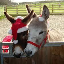 Donkey Christmas Festivities